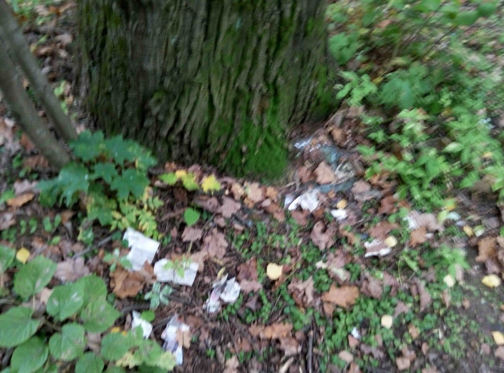 опавший мусор с дерева